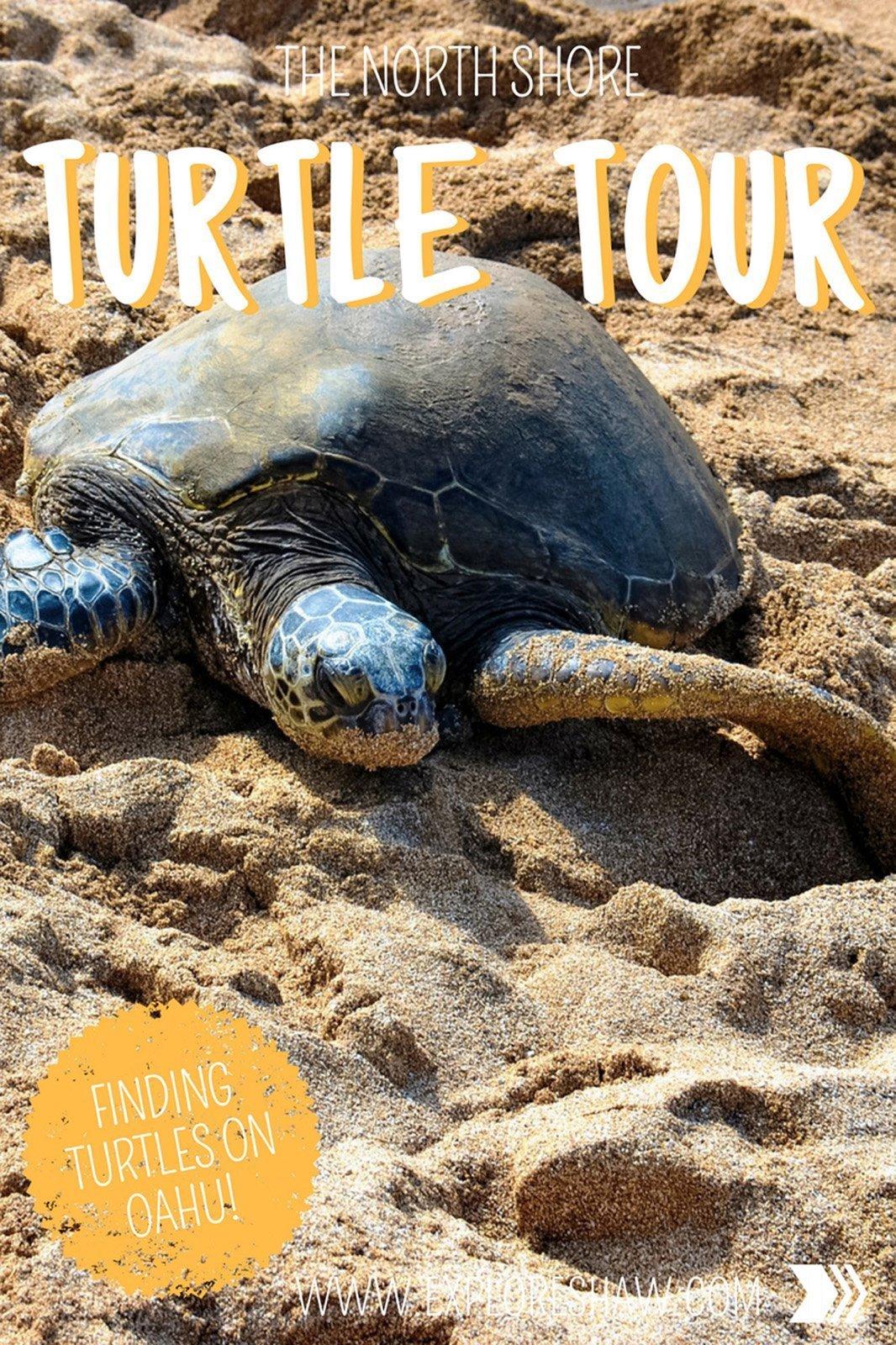 THE NORTH SHORE TURTLE TOUR