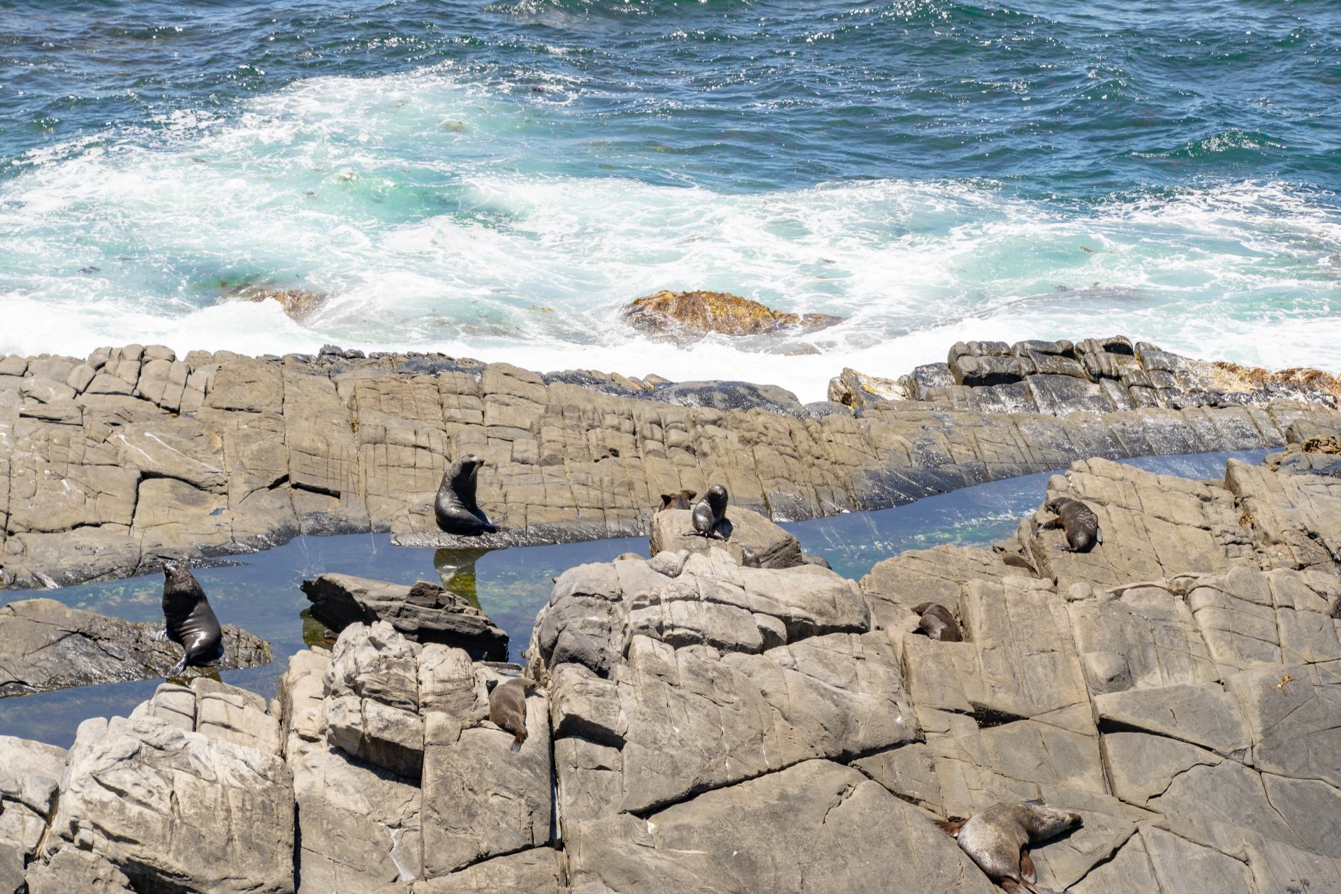 seals at the admirals arch flinders chase national park