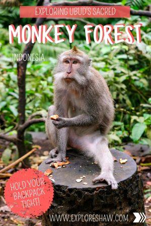 EXPLORING UBUD'S SACRED MONKEY FOREST