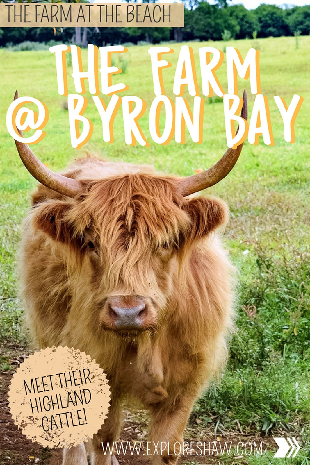 For a more unique in Byron, away from the surf beaches, you need to check out The Farm at Byron Bay - the perfect place to see the Highland Cattle up close and personal and a very hipster cafe.