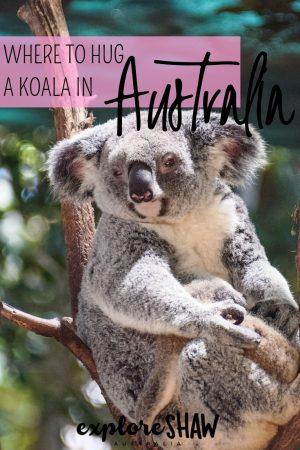 WHERE TO HUG A KOALA IN AUSTRALIA