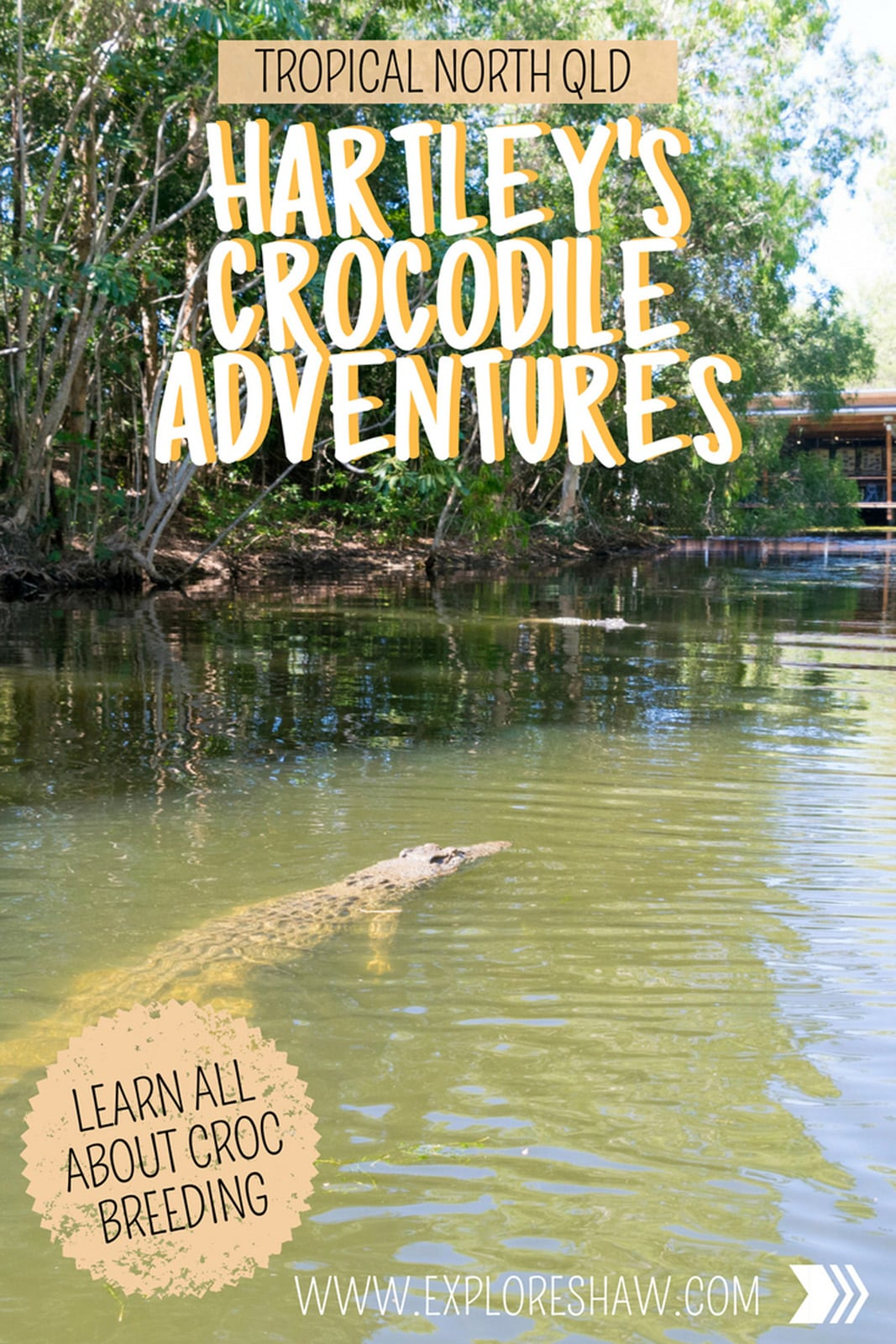 To get up close and personal with a massive crocodile, head to Hartley's Crocodile Adventures, sitting half way between Port Douglas and Cairns in Tropical North Queensland.  #Queensland #Australia #TropicalNorthQueensland