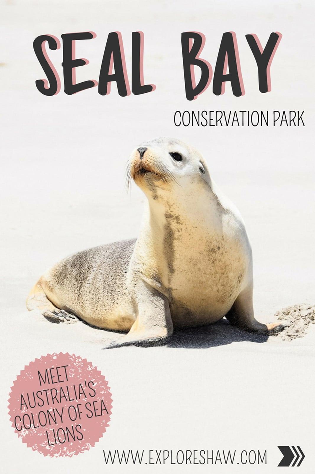 A guide to visiting Seal Bay Conservation Park on Kangaroo Island - Australia's largest colony of wild sea lions. #KangarooIsland #SouthAustralia #Australia