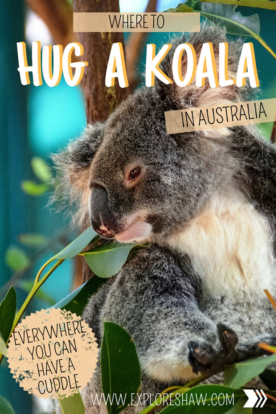 WHERE TO HUG KOALAS IN AUSTRALIA