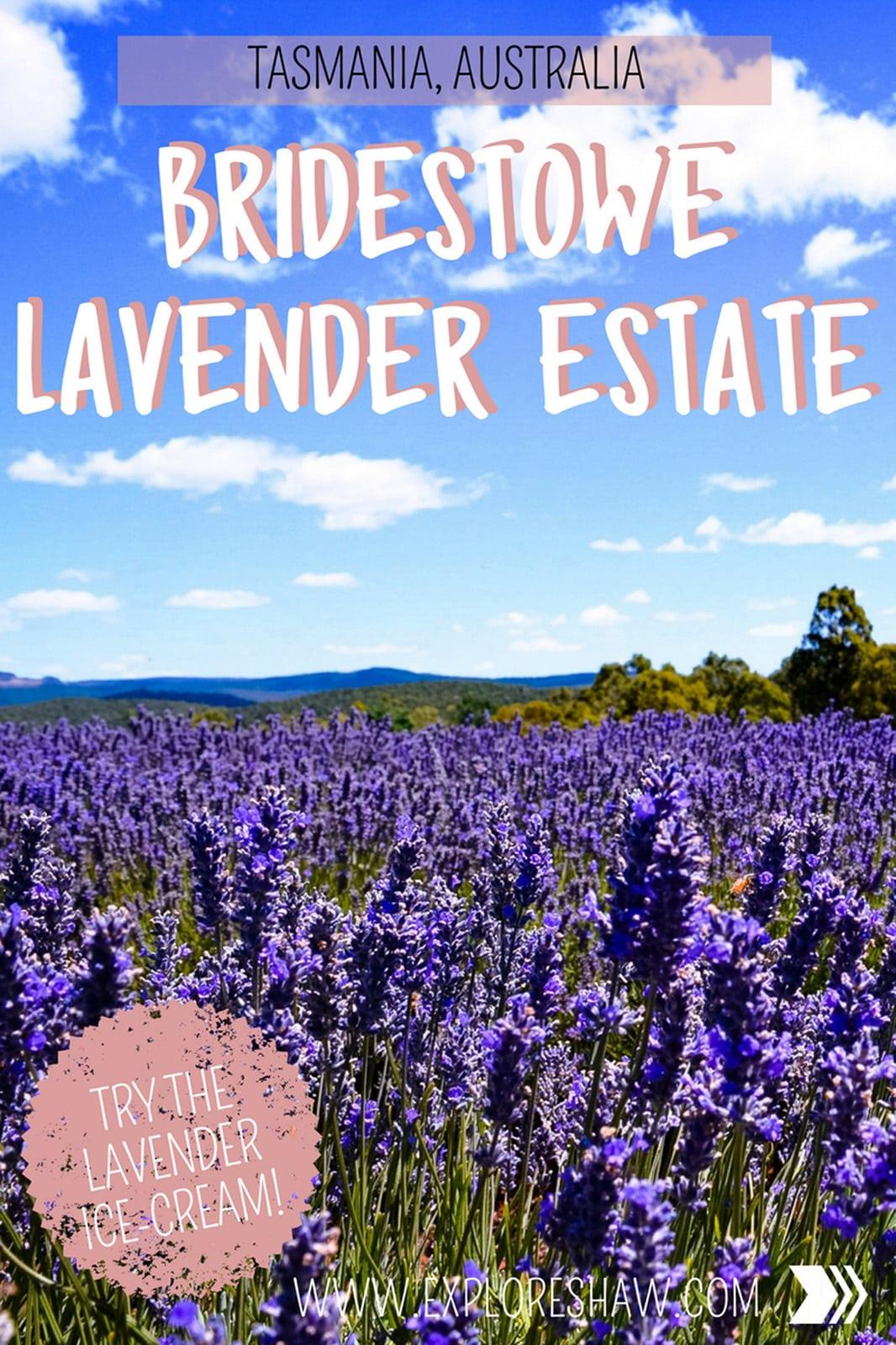 Explore Australia's biggest Lavender Farm at Bridestowe Lavender Estate, just a short trip out of Launceston in Tasmania. #Australia #Tasmania