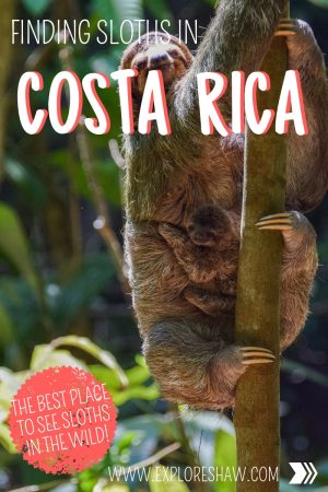 FINDING SLOTHS IN COSTA RICA