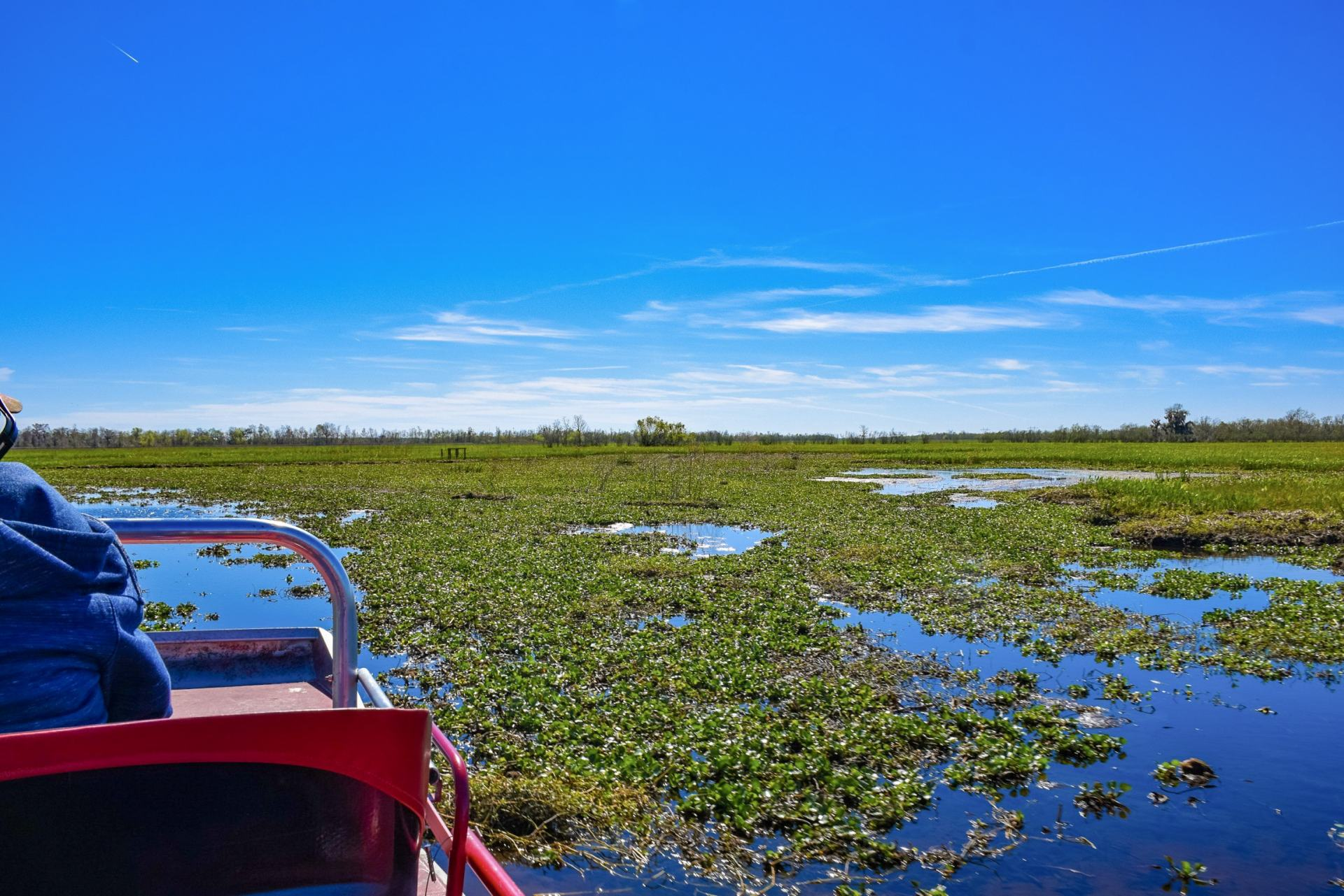Airboating in Louisiana