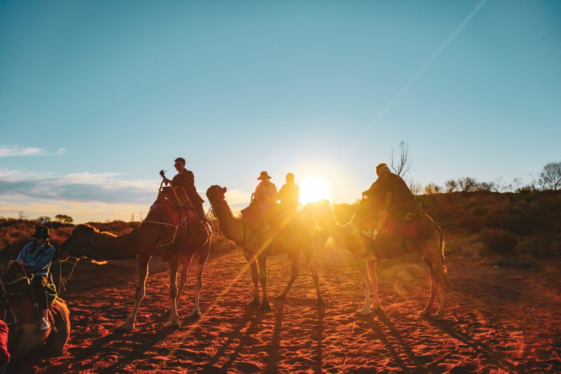 field of light by camel