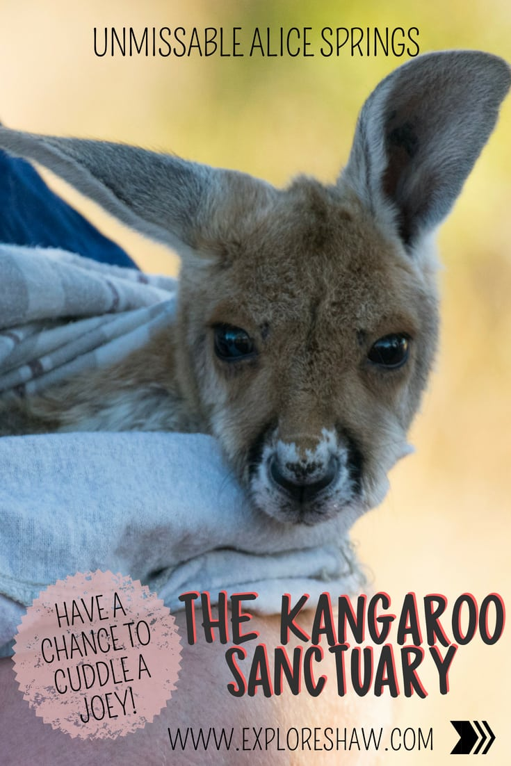 UNMISSABLE ALICE SPRINGS: THE KANGAROO SANCTUARY