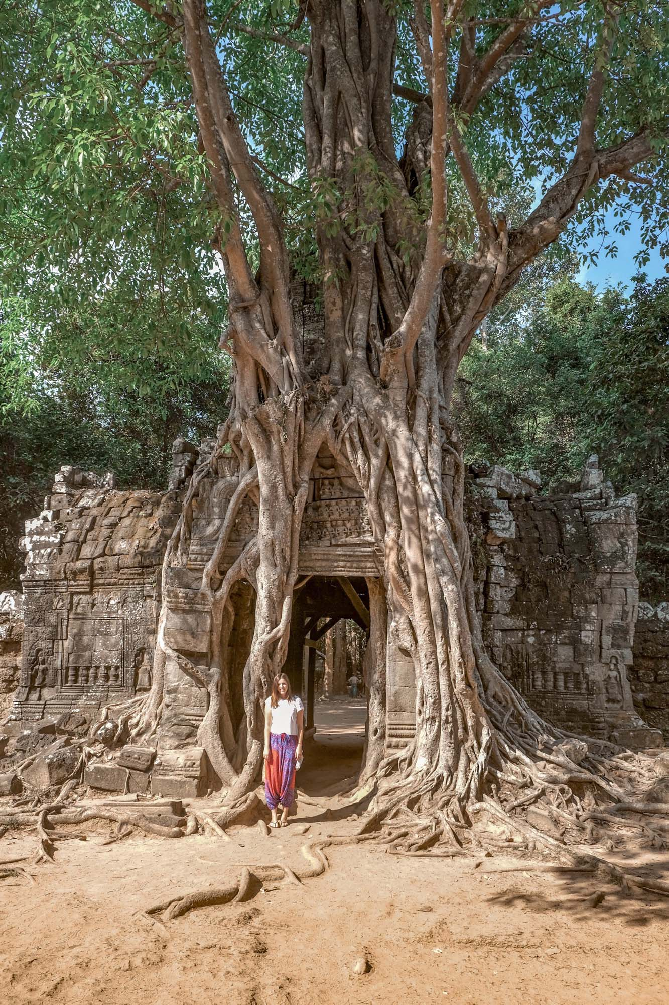 tree temple at ta som