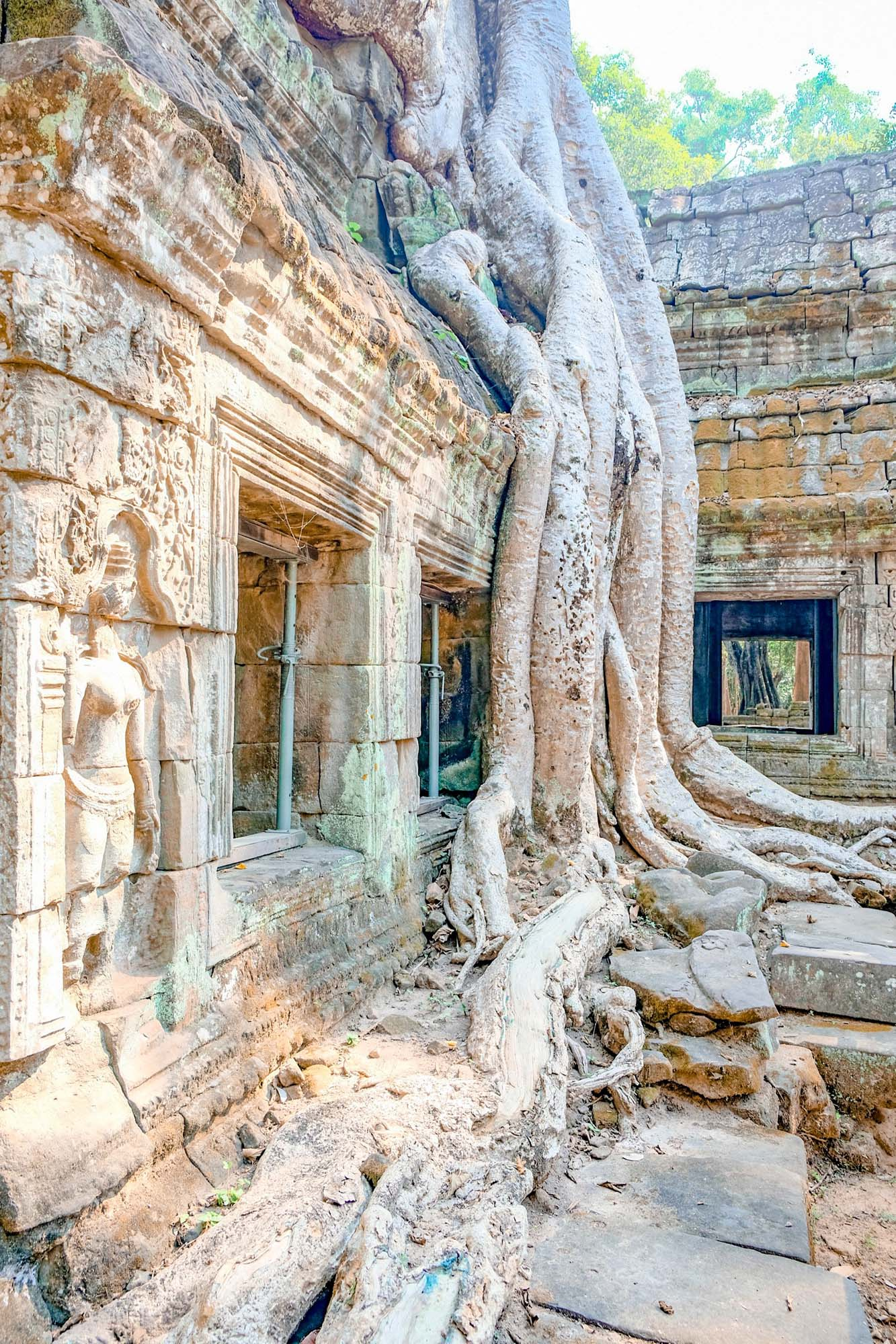 tree growing through a temple in angkor wat