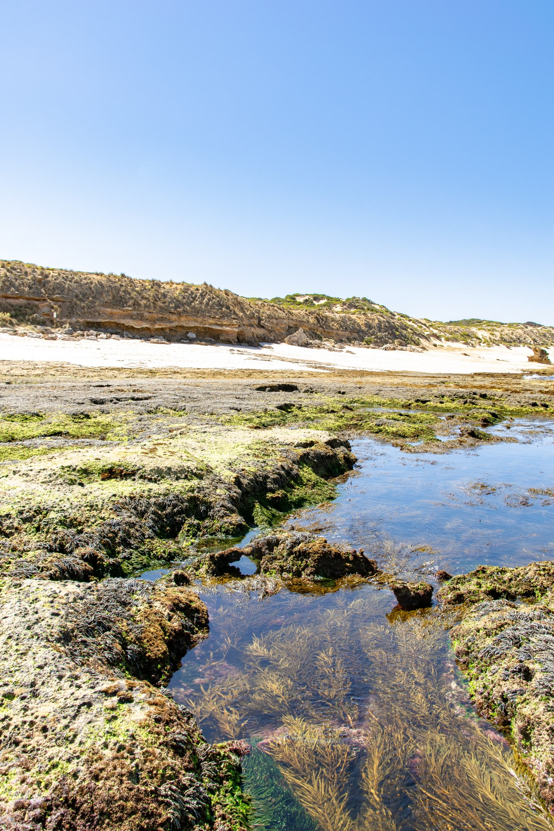 rockpools at number 16 beach