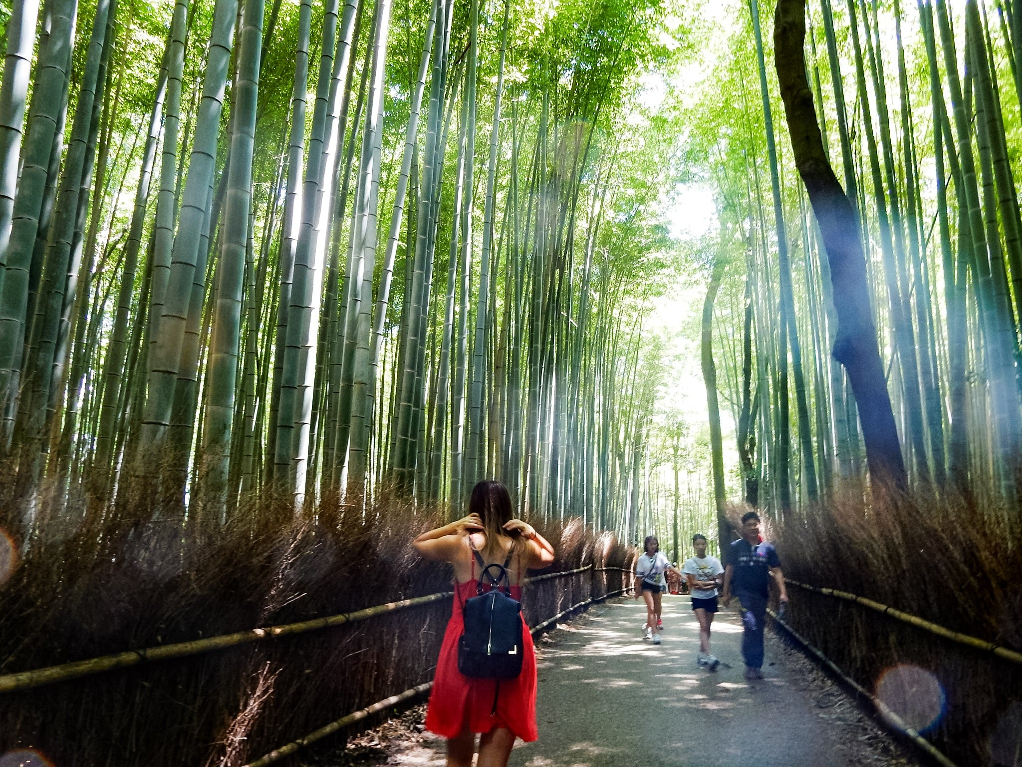 the bamboo forest kyoto