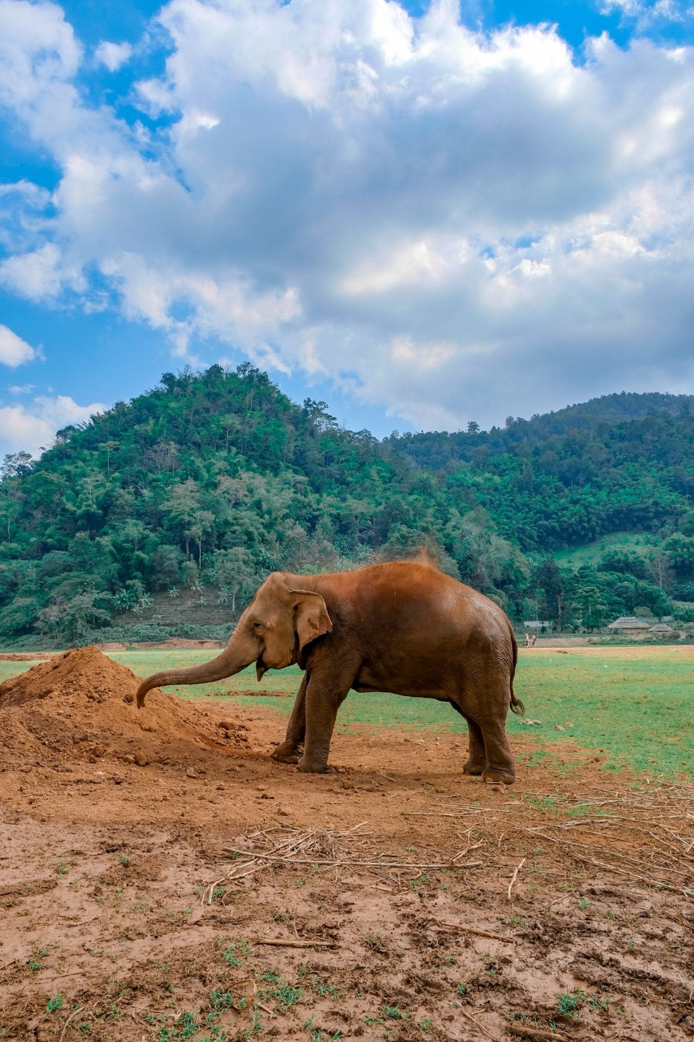 elephant mud bath at chiang mai's elephant nature park