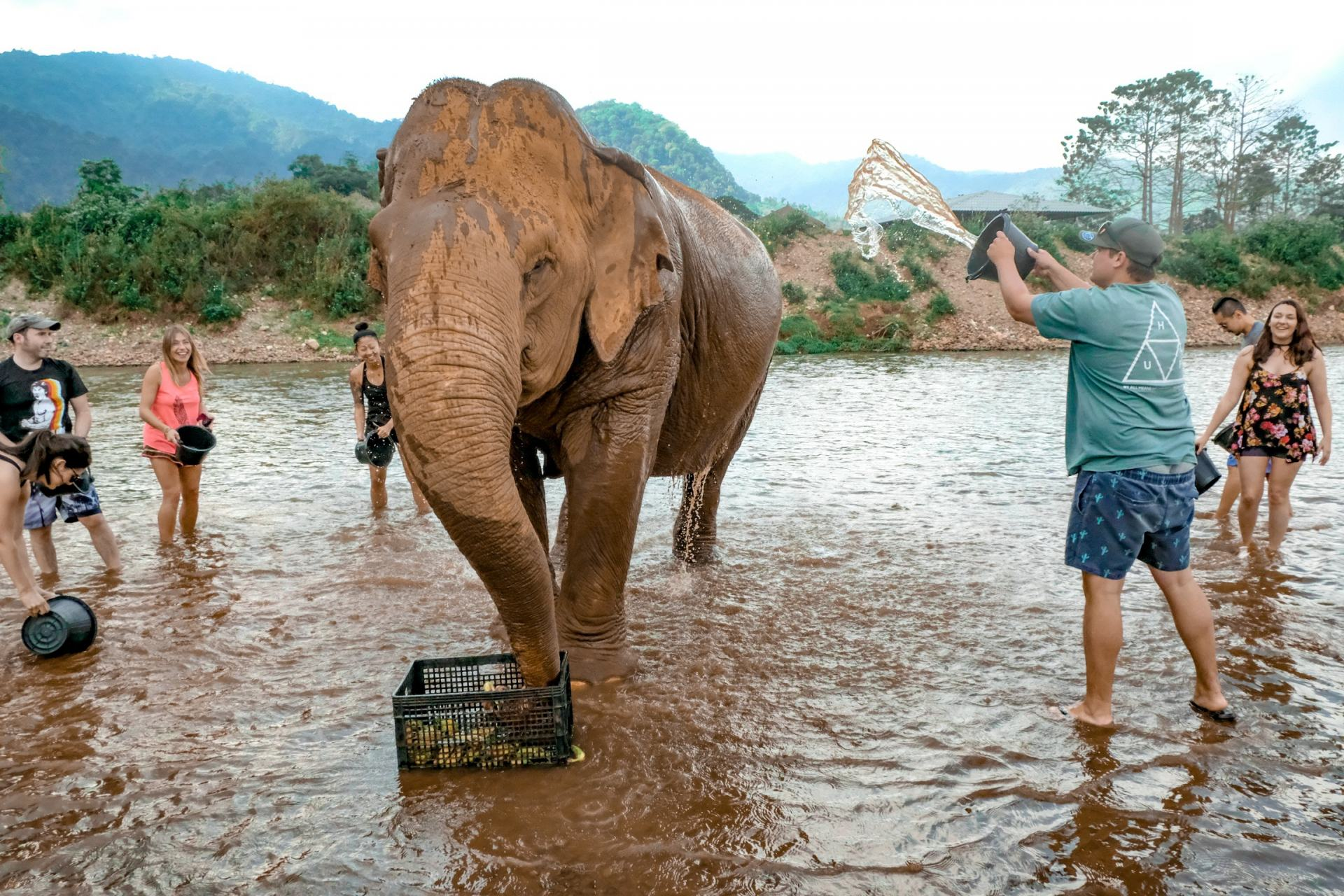 elephant bathing at chiang mai's elephant nature park