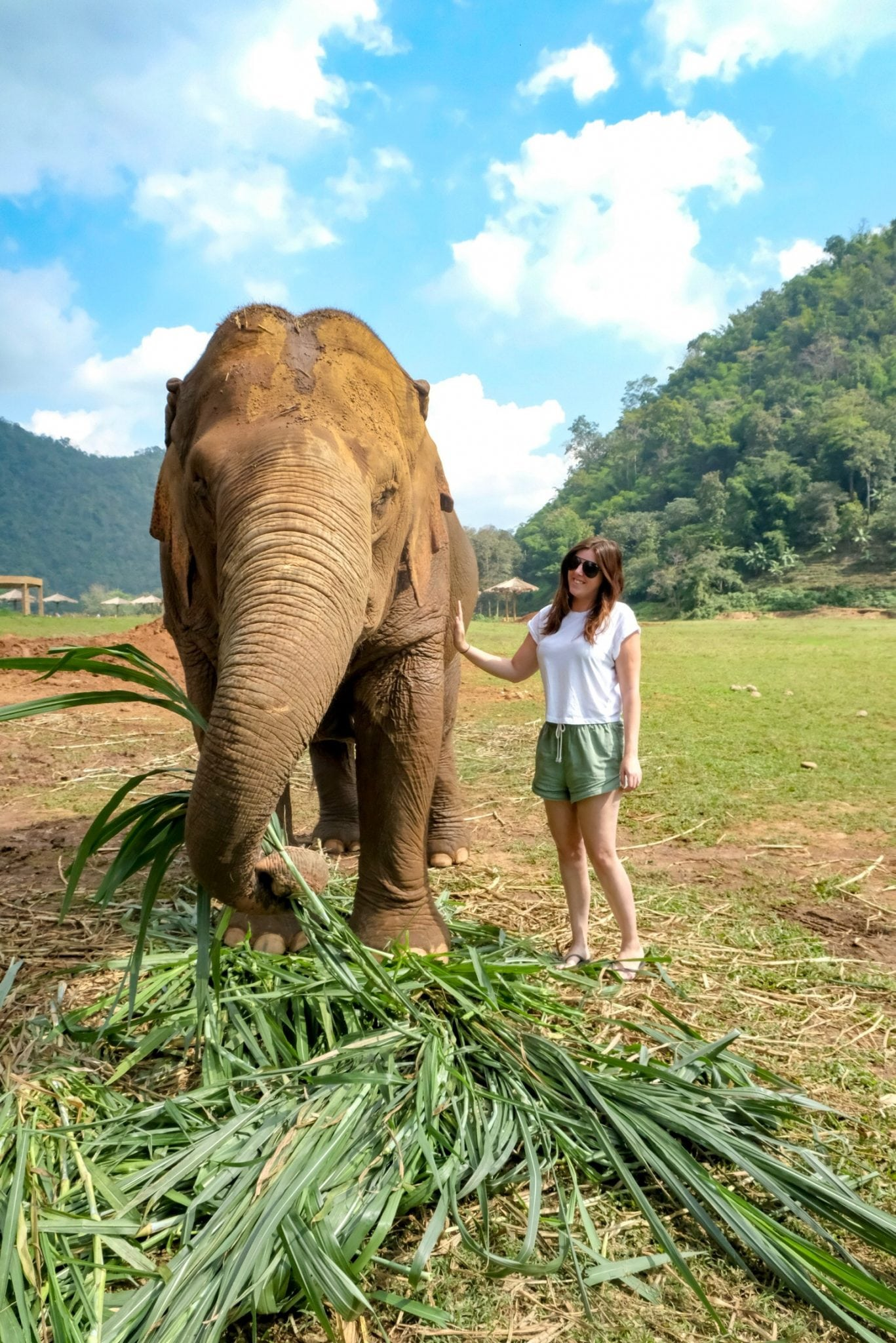hanging out with the elephants at chiang mai's elephant nature park