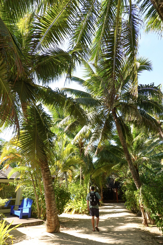 palm trees in rarotonga
