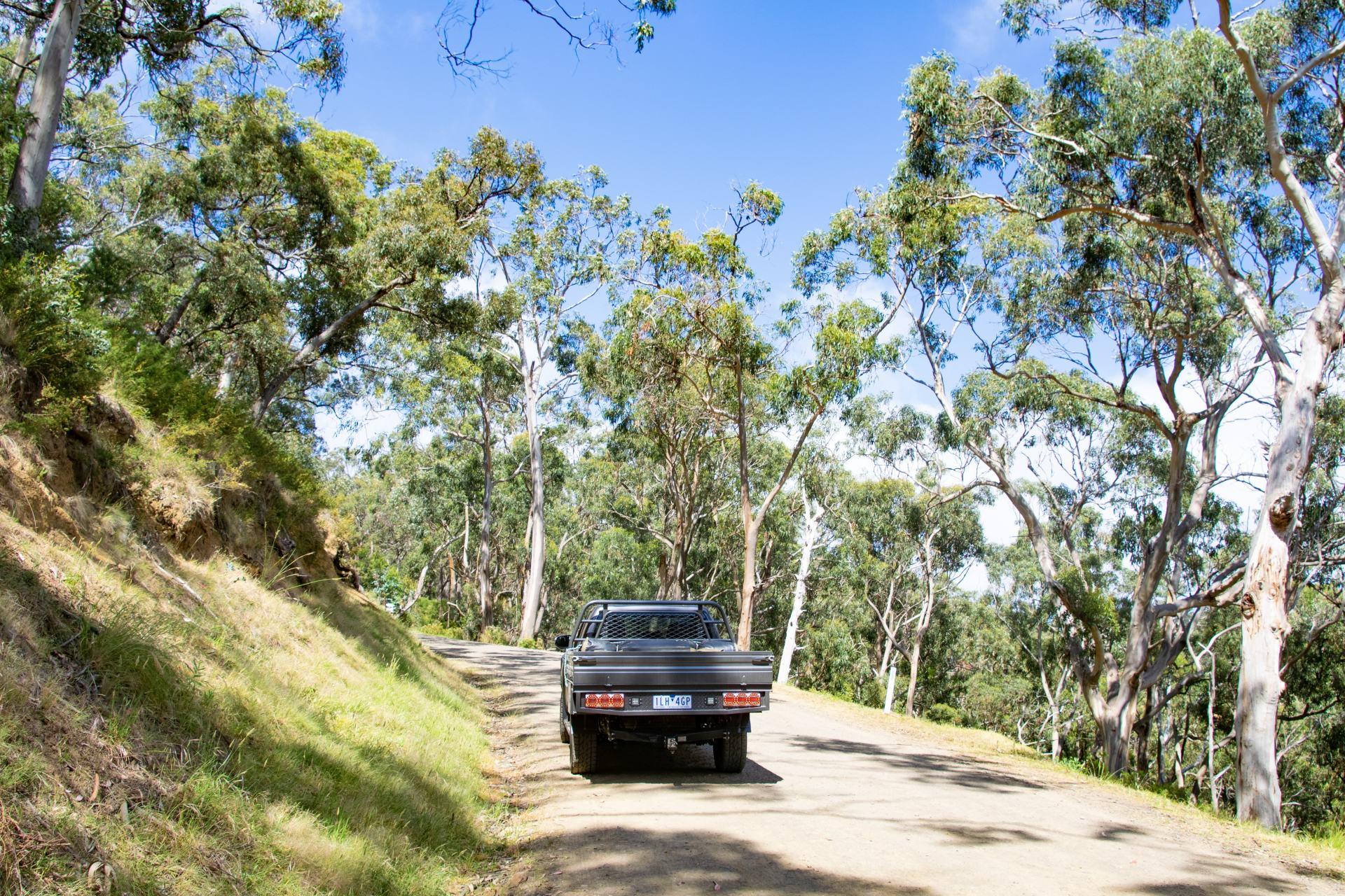 kennett river koala walk