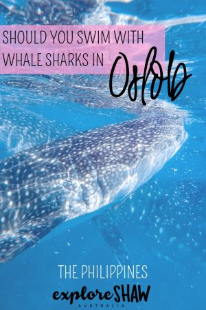 SHOULD YOU SWIM WITH WHALE SHARKS IN OSLOB