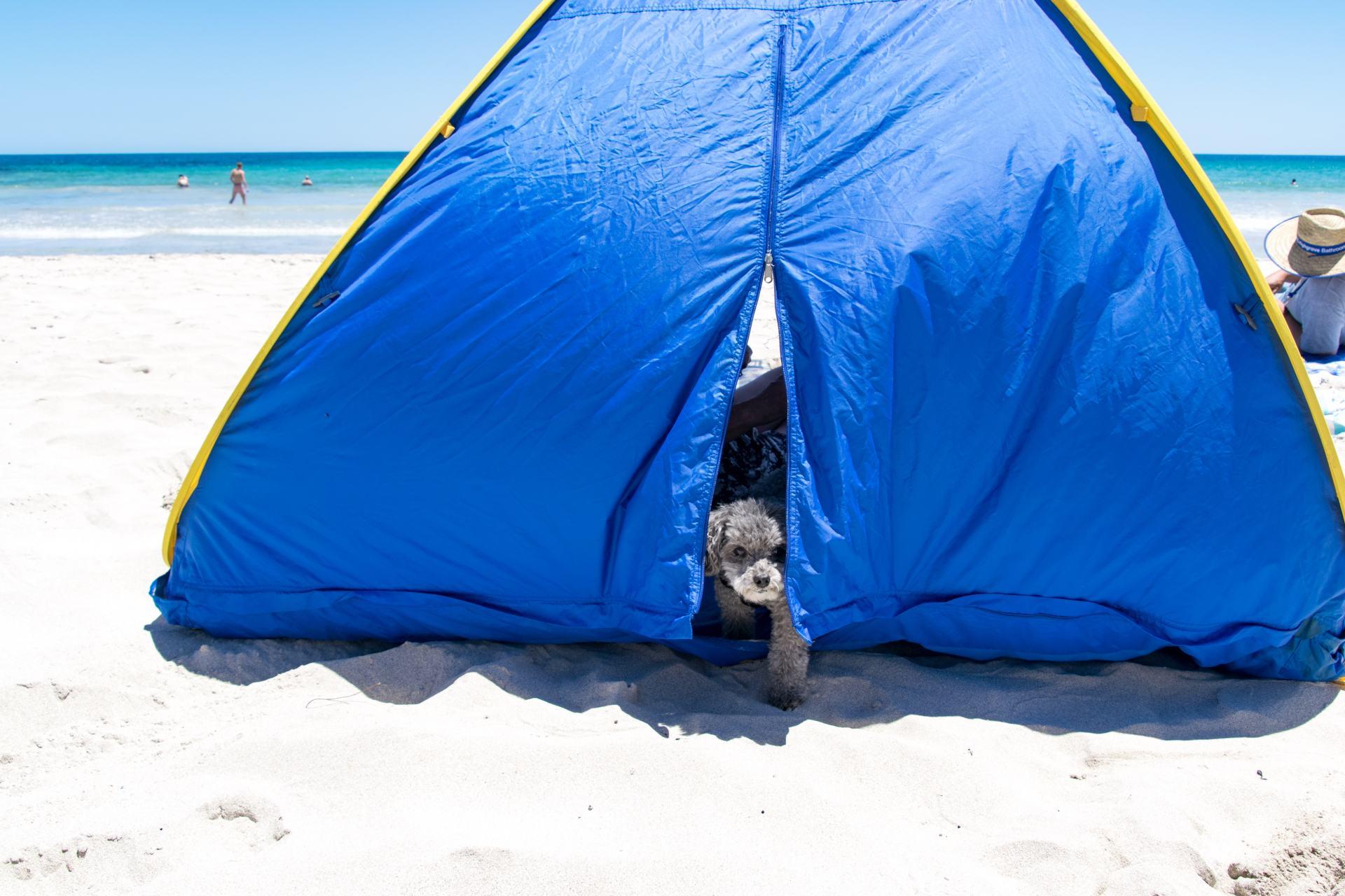 pets on kangaroo island