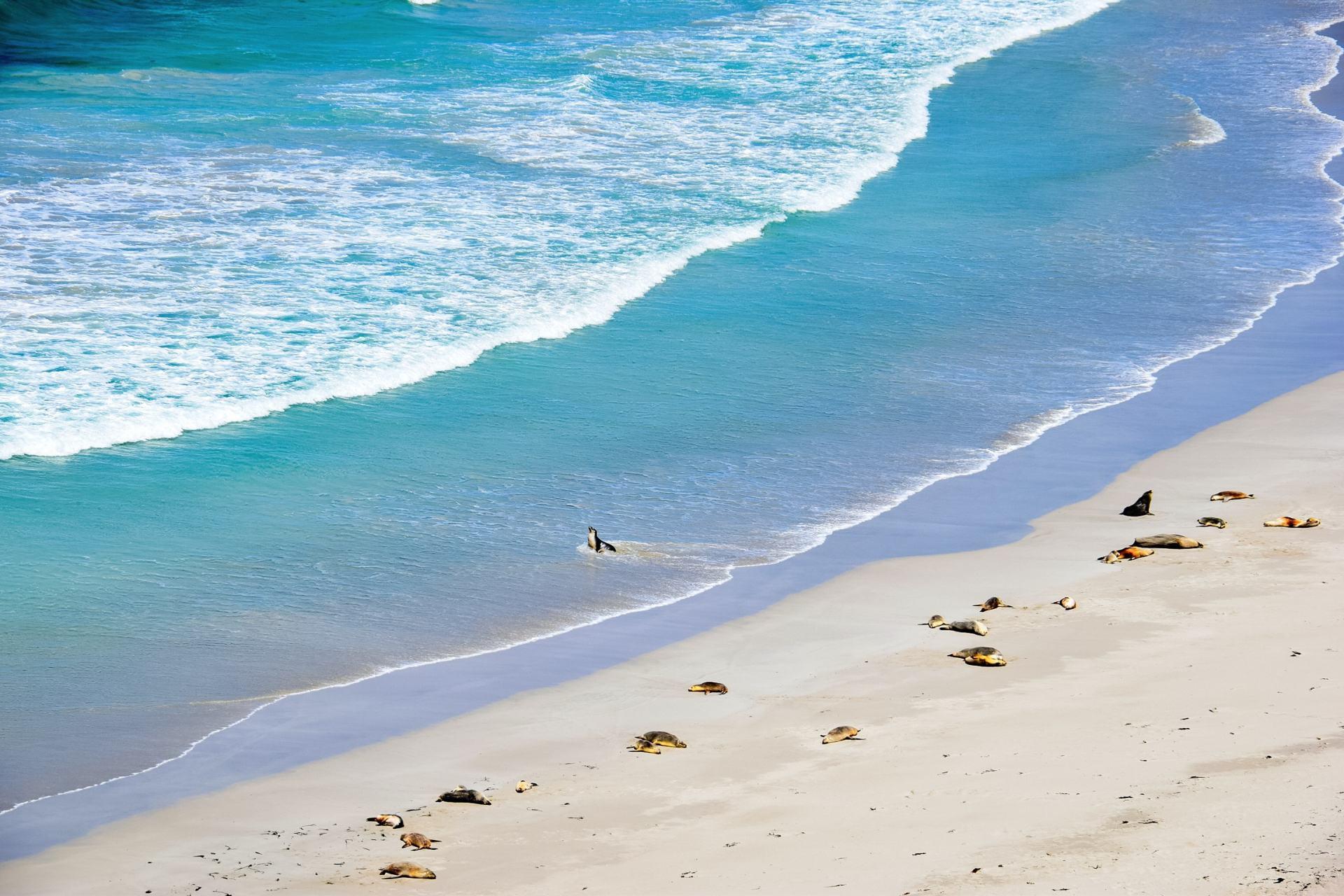 seal bay beach
