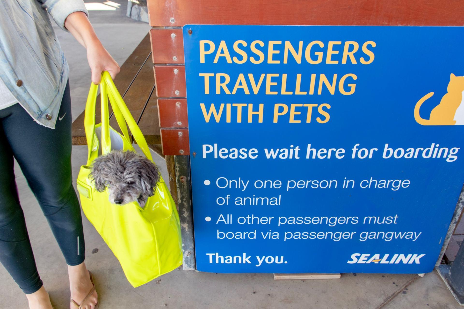pets on the sealink ferry to kangaroo island