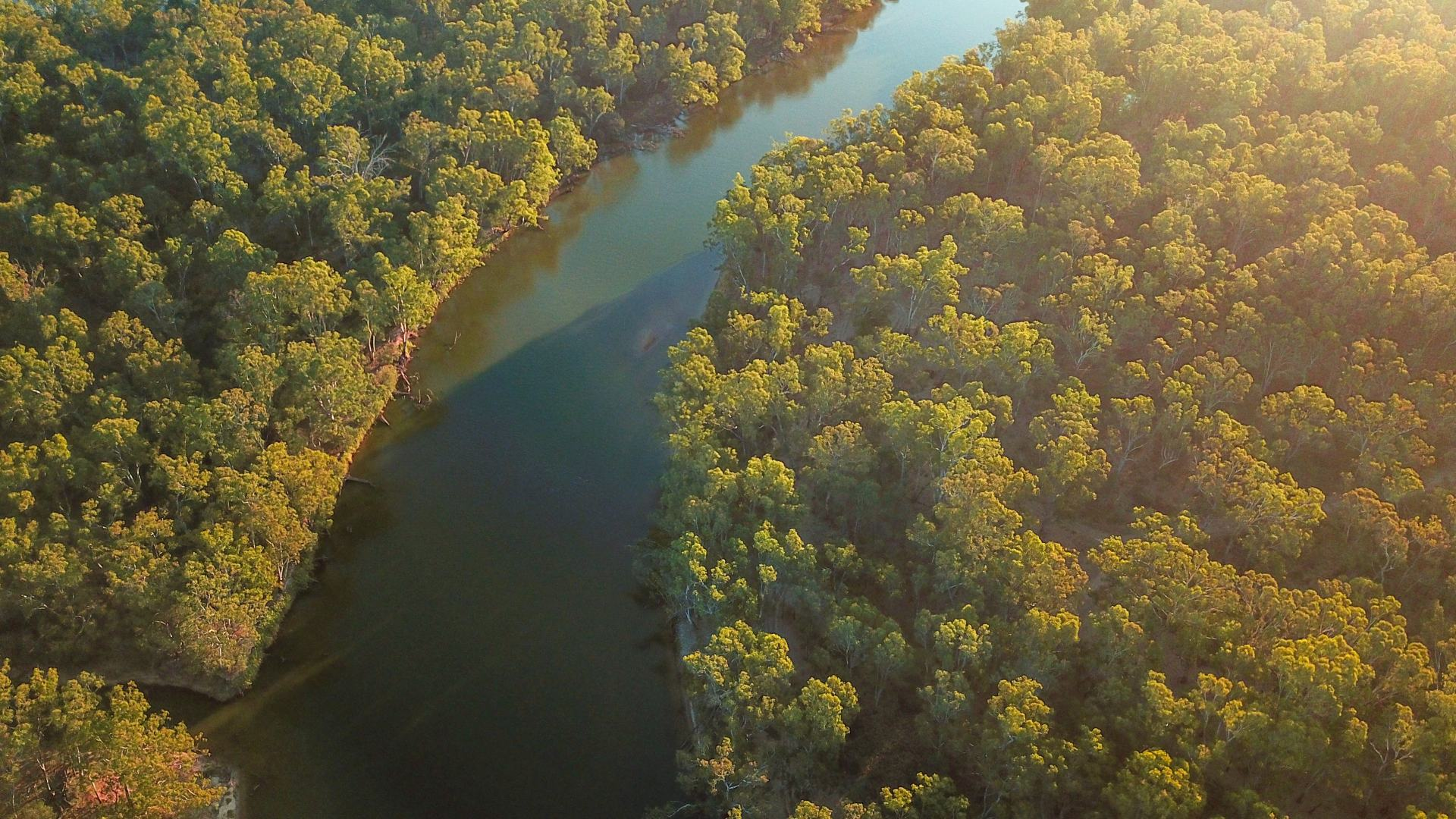 the murray river at yarrawonga