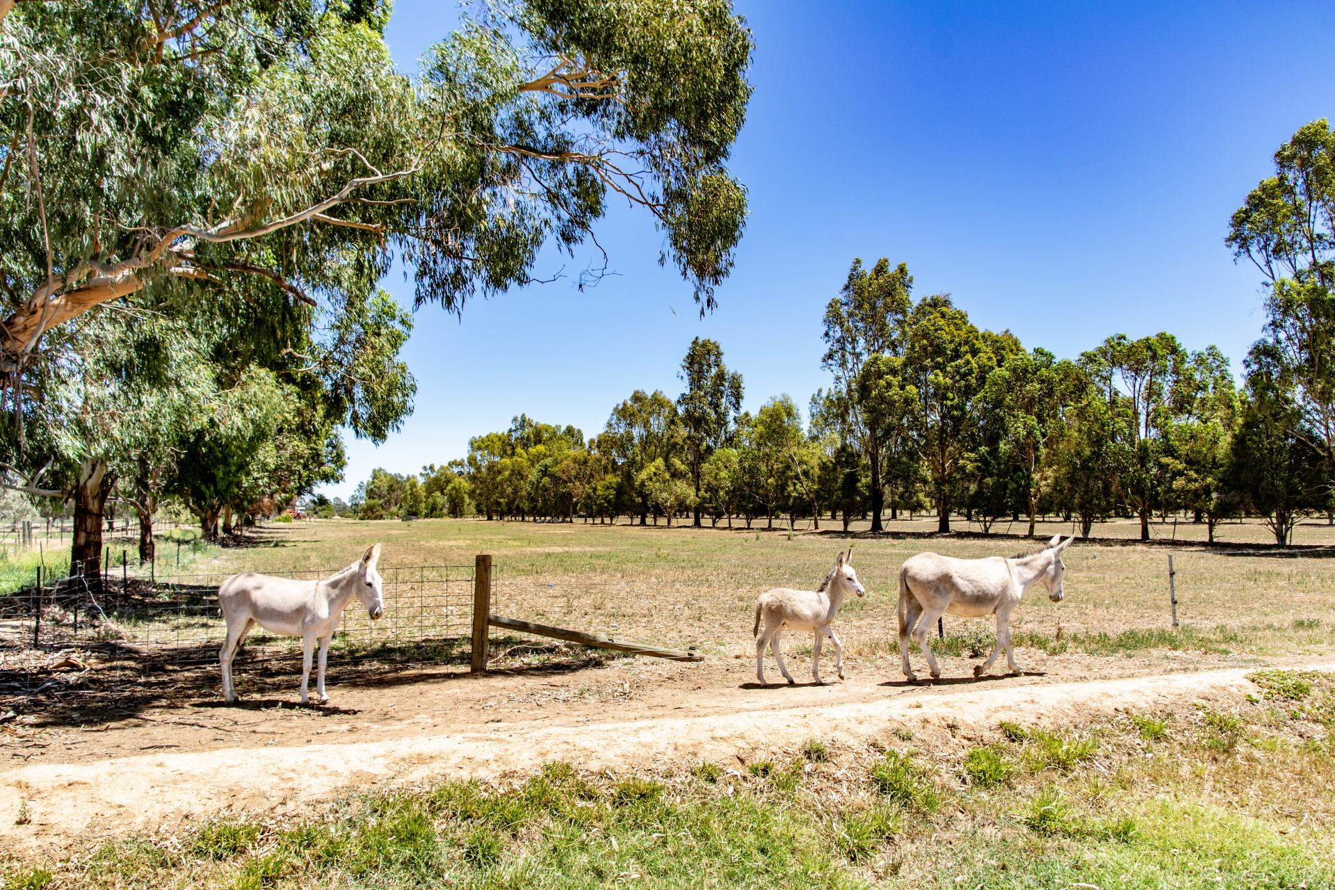 donkeys at cactus country