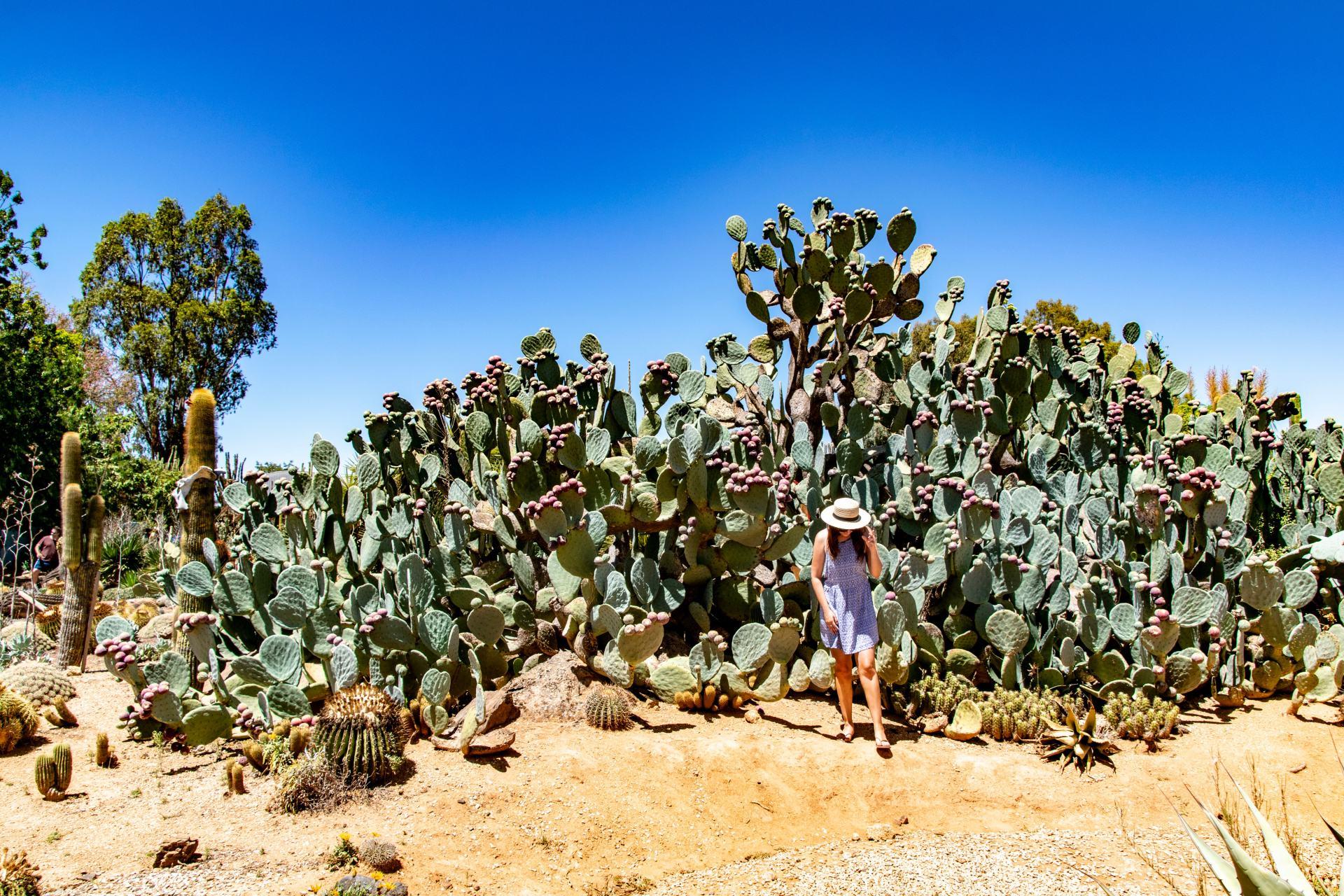 cactus country strathmerton