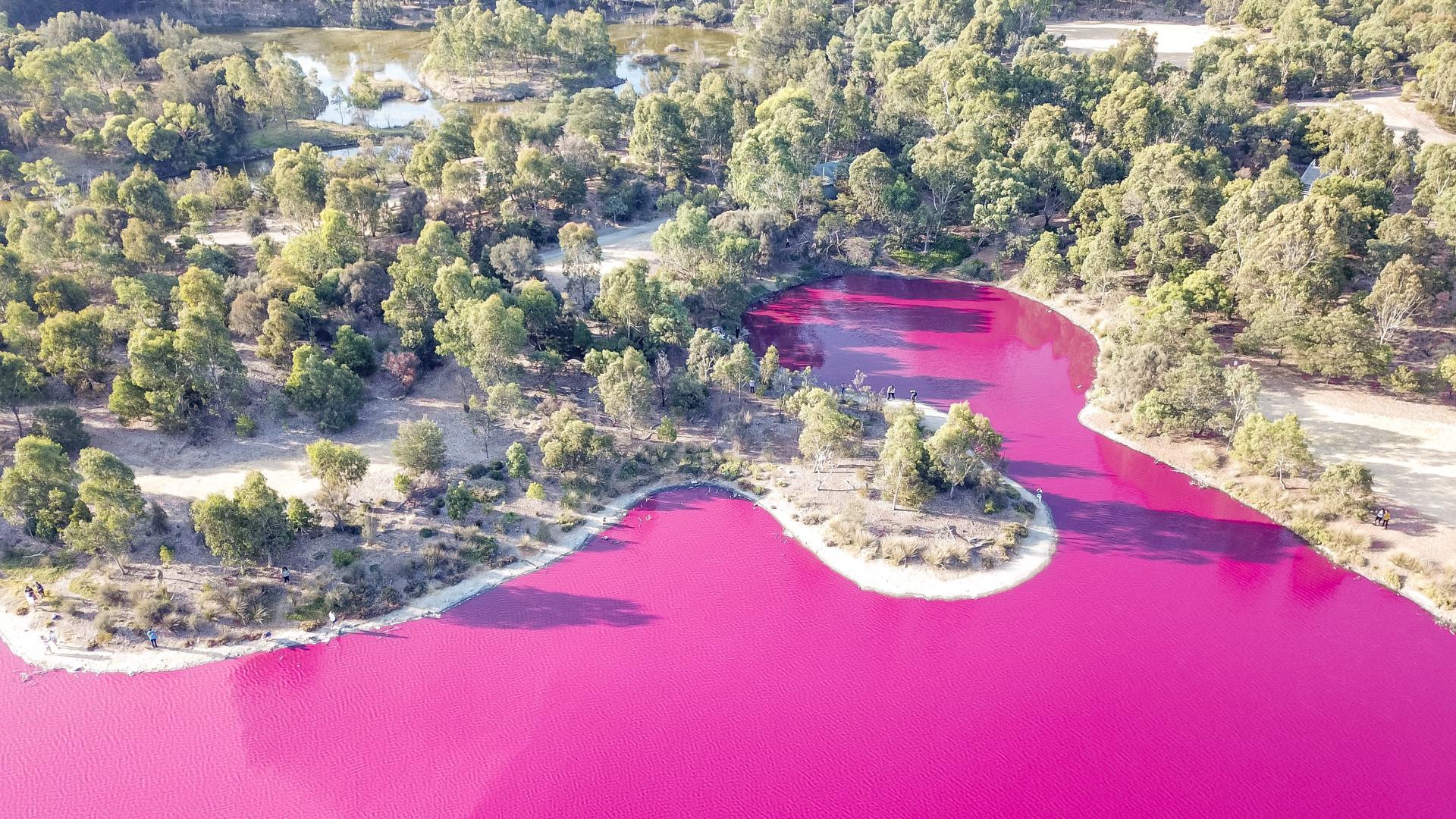 westgate park pink lake