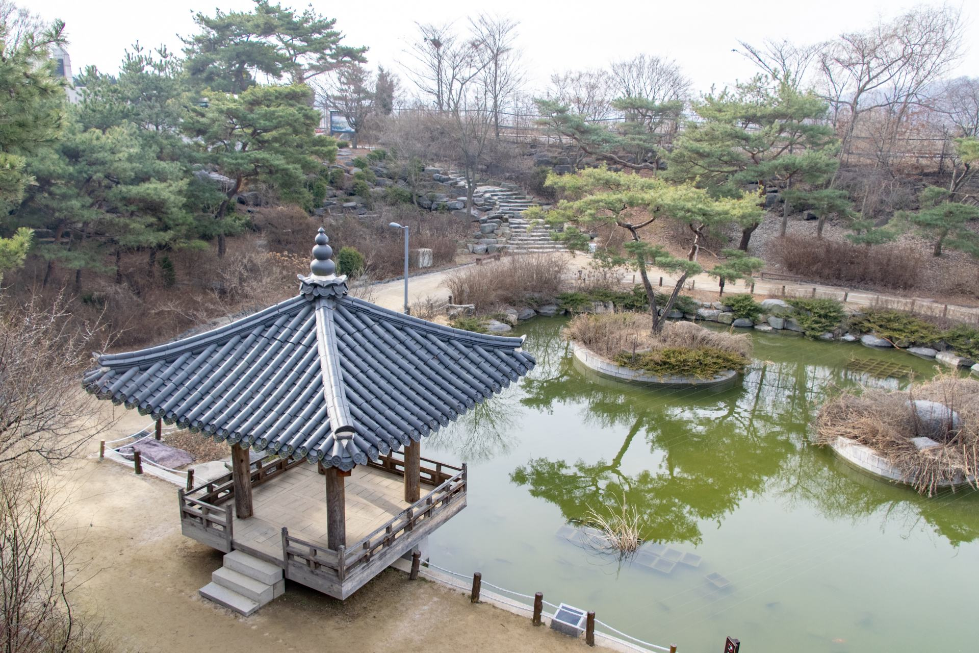 peace pond at the dmz
