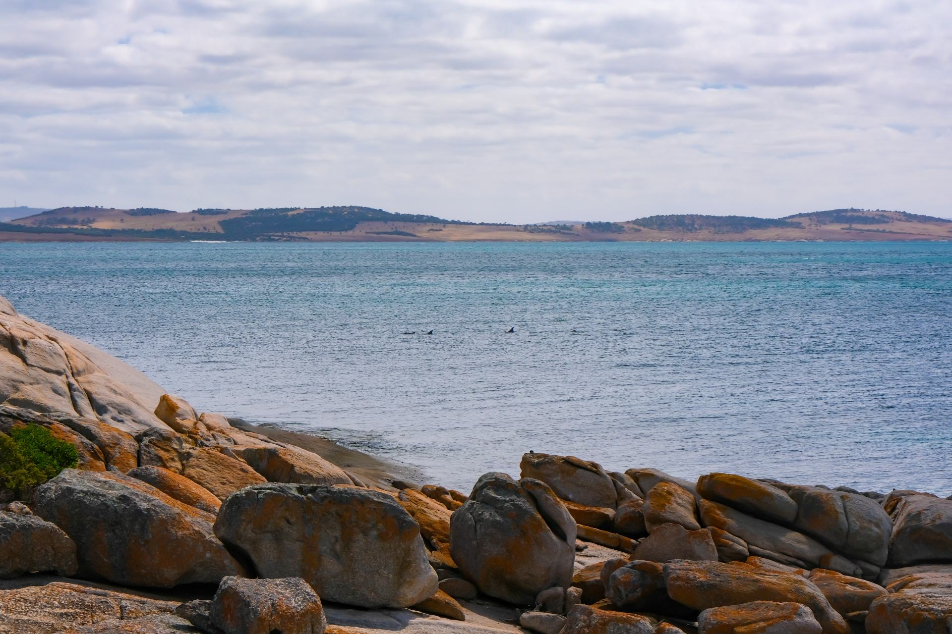dolphins at port lincoln national park