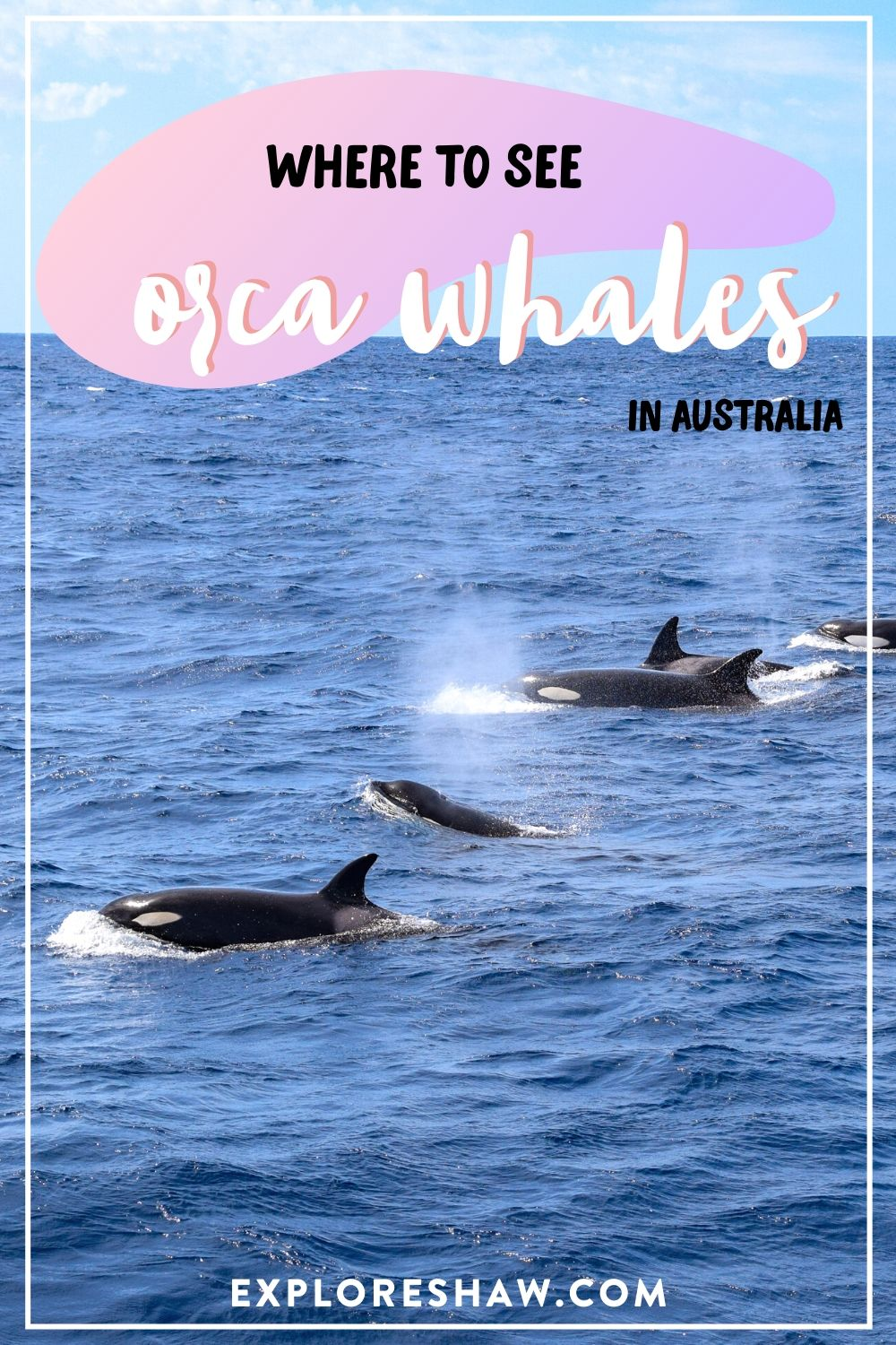orca whales in australia