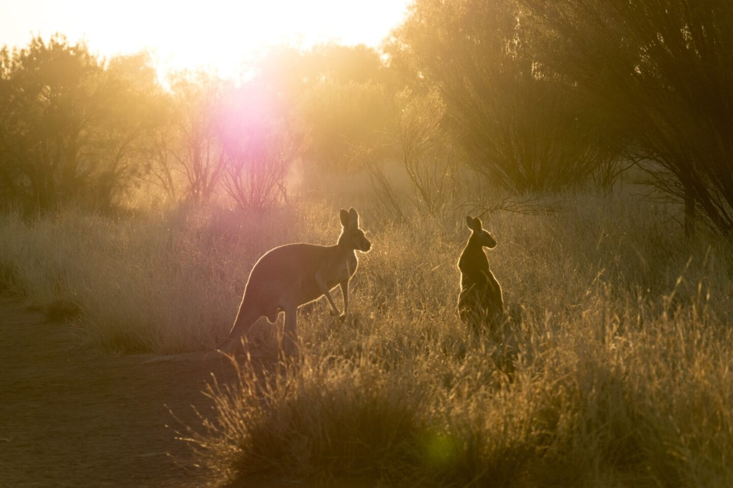 What To Do If You Hit A Kangaroo In The Outback